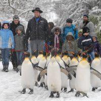 Dreiviertel der Deutschschweizer befürworten Zoos