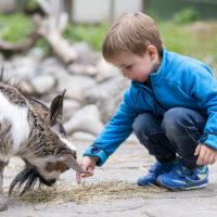 Zoos und Tierparks durch Bundesrat ausgebremst