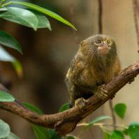 Neue Tropenanlage im Tierpark Bern