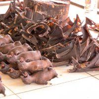 Corona-Pandemie: Wildtiermärkte in China geschlossen halten
