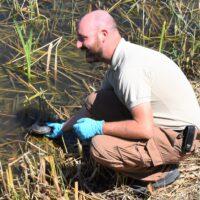 Wiederansiedlung von Sumpfschildkröten im Kanton Genf