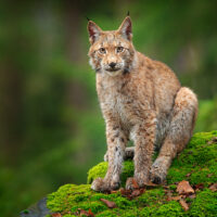 51,9 % der Schweizer Stimmbürger gegen das missratene Jagdgesetz!