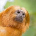 Grundrechte für Primaten