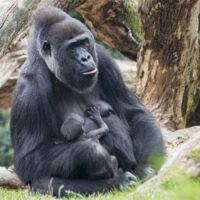 Zoo Zürich: 7,8 Millionen für neue Anlagen