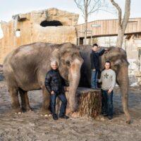 Knies Kinderzoo: Elefantenkuh Delhi im Alter von 54 Jahren gestorben
