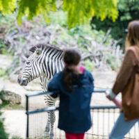 Die meisten Zoos öffnen mit Einschränkungen am 1. März 2021