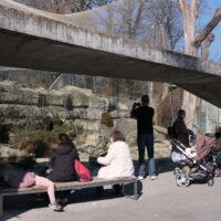 Gedränge und Chaos im Zoo: Fehlanzeige