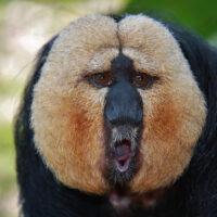 """Basler Regierung empfiehlt die Volksinitiative """"Grundrechte für Primaten"""" zur Ablehnung"""